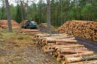 tala de+arboles+ecologia+medio+ambiente+planeta+tierra+Deforestacion