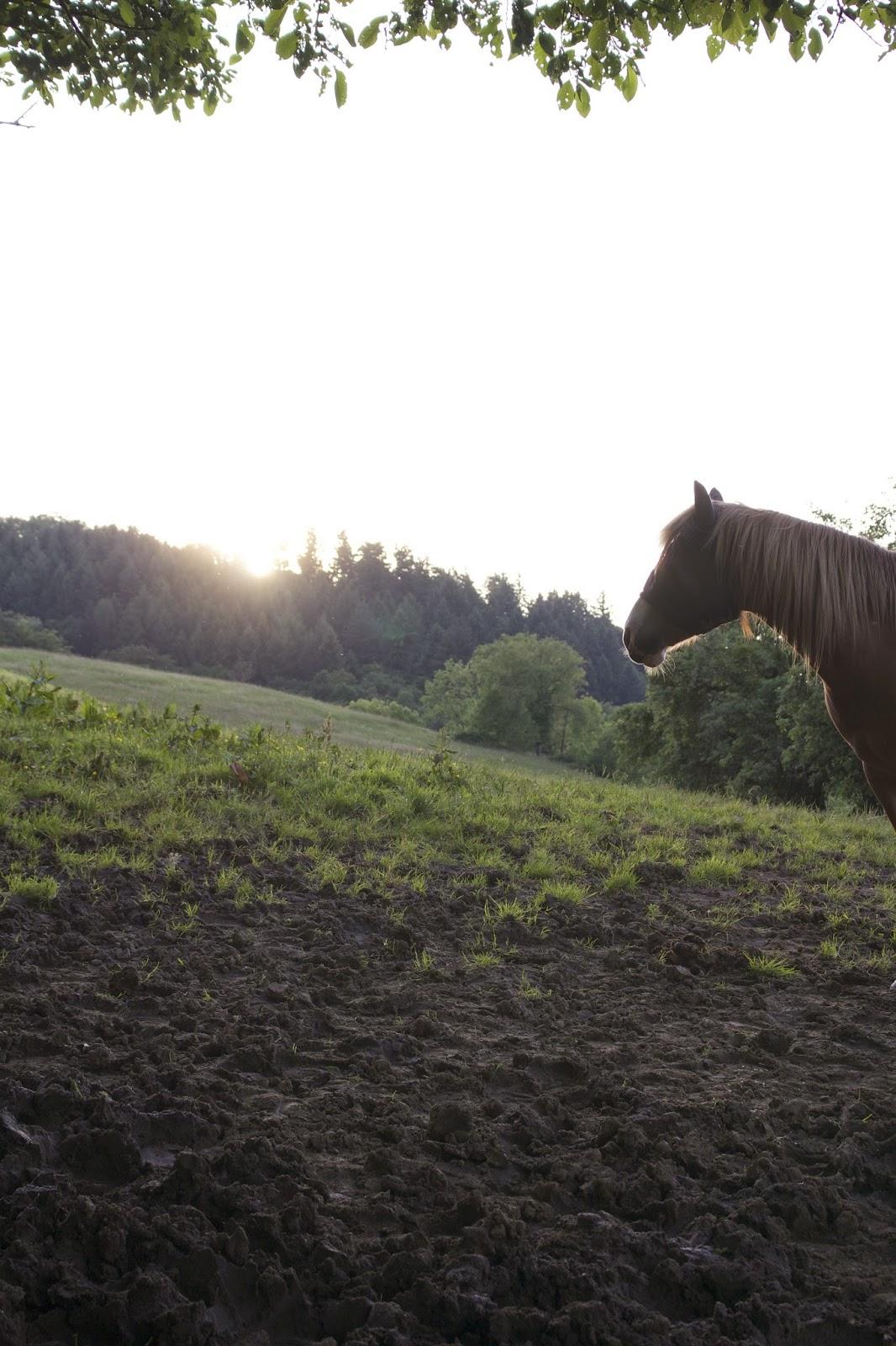 PferdeStärken Alte Pferde Pferde Verstehen Blog