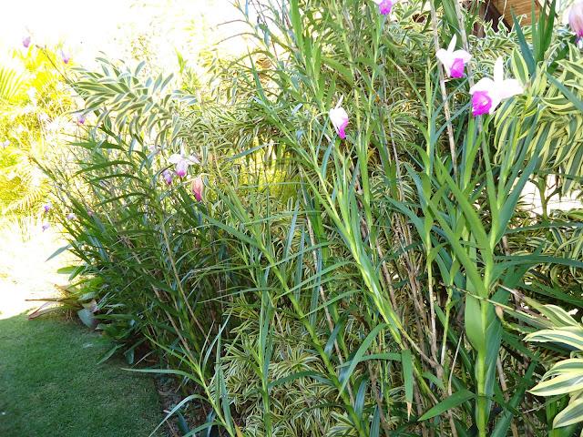 mini jardins orientais: +Manutenção de Jardins: Projeto em destaque: Jardim para descansar