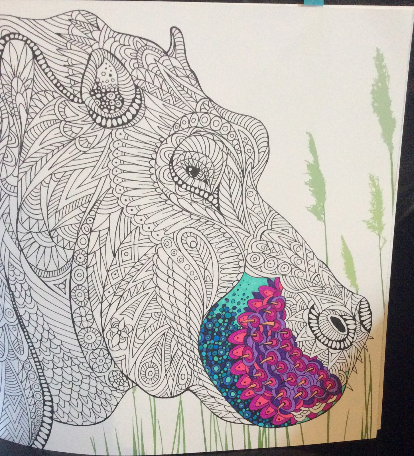 My Youngest Son Age 12 Stole One Of Pages The Llama To Colour