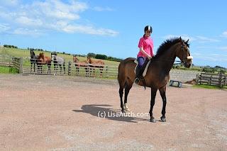 horse, irish sport horse