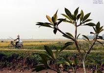 VIETNAM : UN ENORME POTENCIAL DE FUTURO