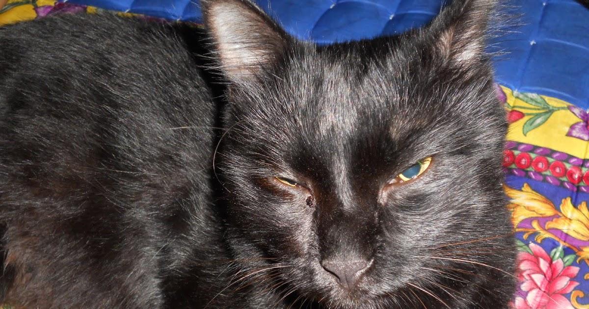 Ezlin77 Si Kucing Hitam