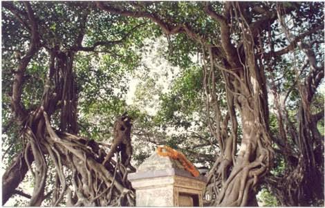 Panihati Chida Dahi Mahotsava tree under which this pastime of the Lord took place
