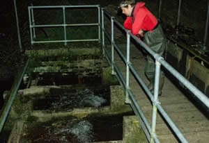 Trapping trout smolts on the Eel Rack