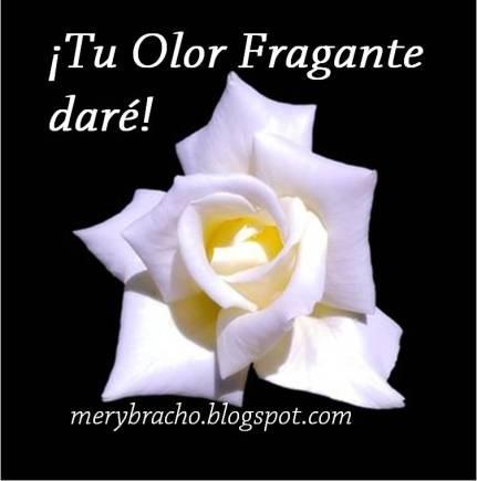 Oración de ser obediente a Diosm Comprometido.. Tu olor fragante manifestaré. El perfume de tu amor. Buenas acciones. Olor del Señor Jesús. Oración en poema. Poesía cristiana motivadora. Poema cristiano