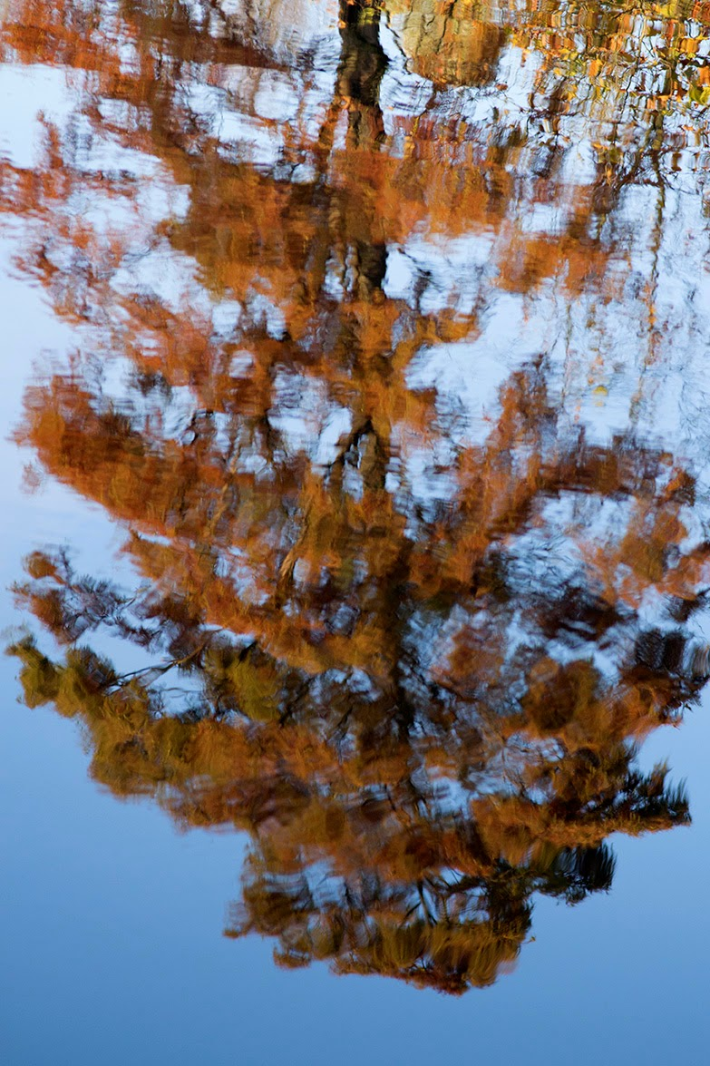 reflection of an autumn tree
