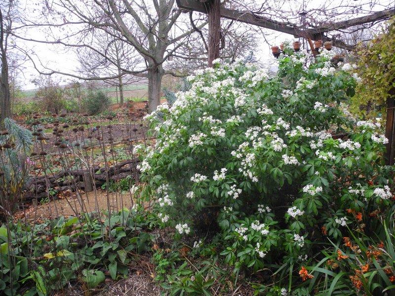 Majorahn ein garten in rheinhessen selbst an einem grauen tr ben novembertag - Gartenrand gestalten ...