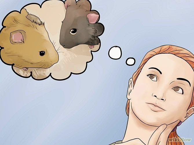 cara agar hamster cepat hamil