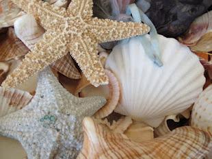 Trocitos de mar en la tierra