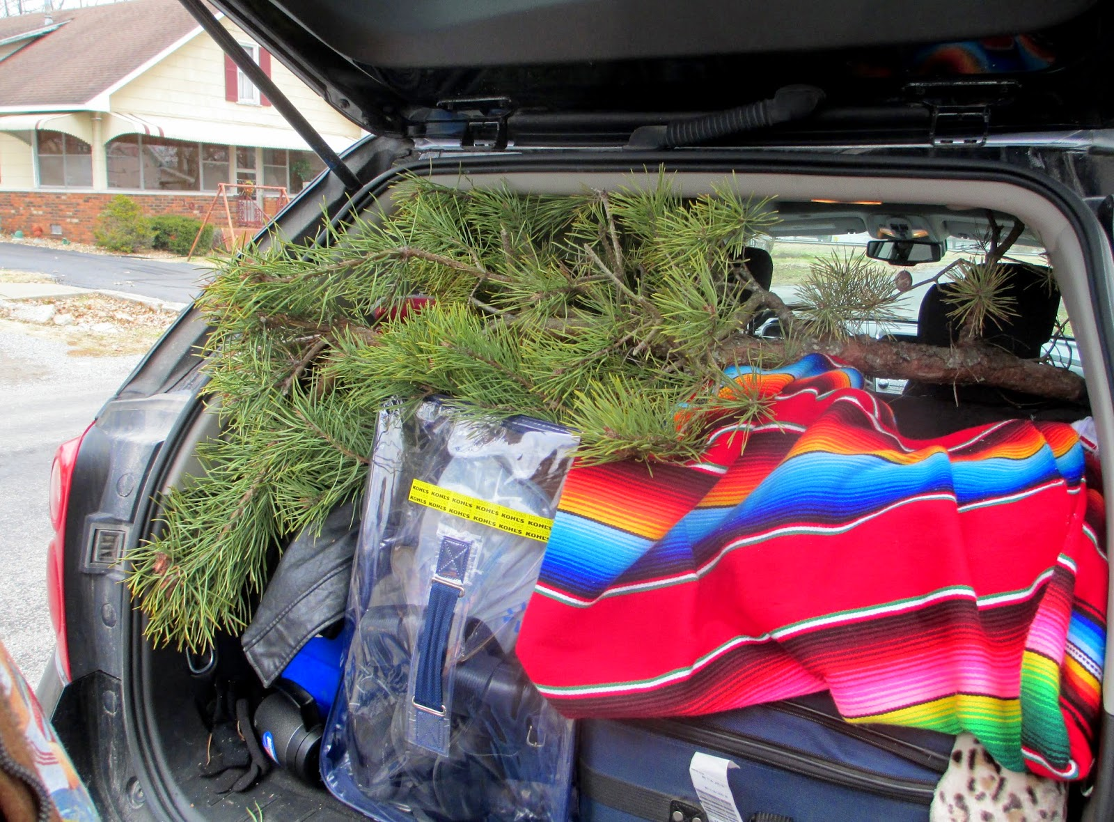 Experiencing Illinois: Wisewell's Christmas Tree Farm
