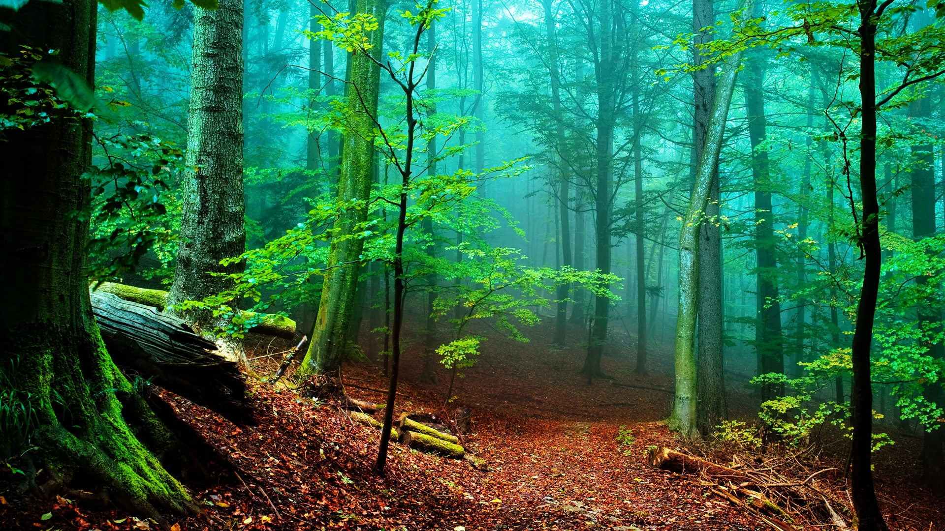 Forest of Fog - High Definition Wallpapers - HD wallpapers