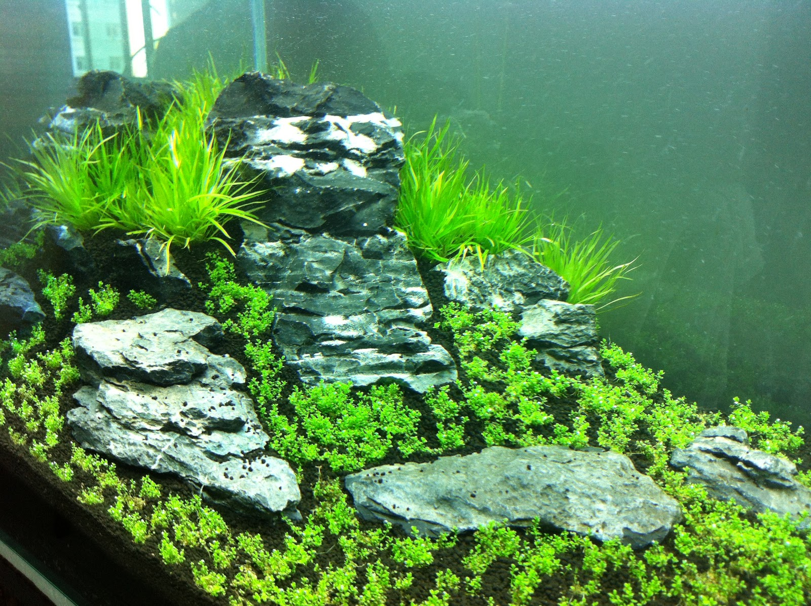 My First Iwagumi Aquascape Journal