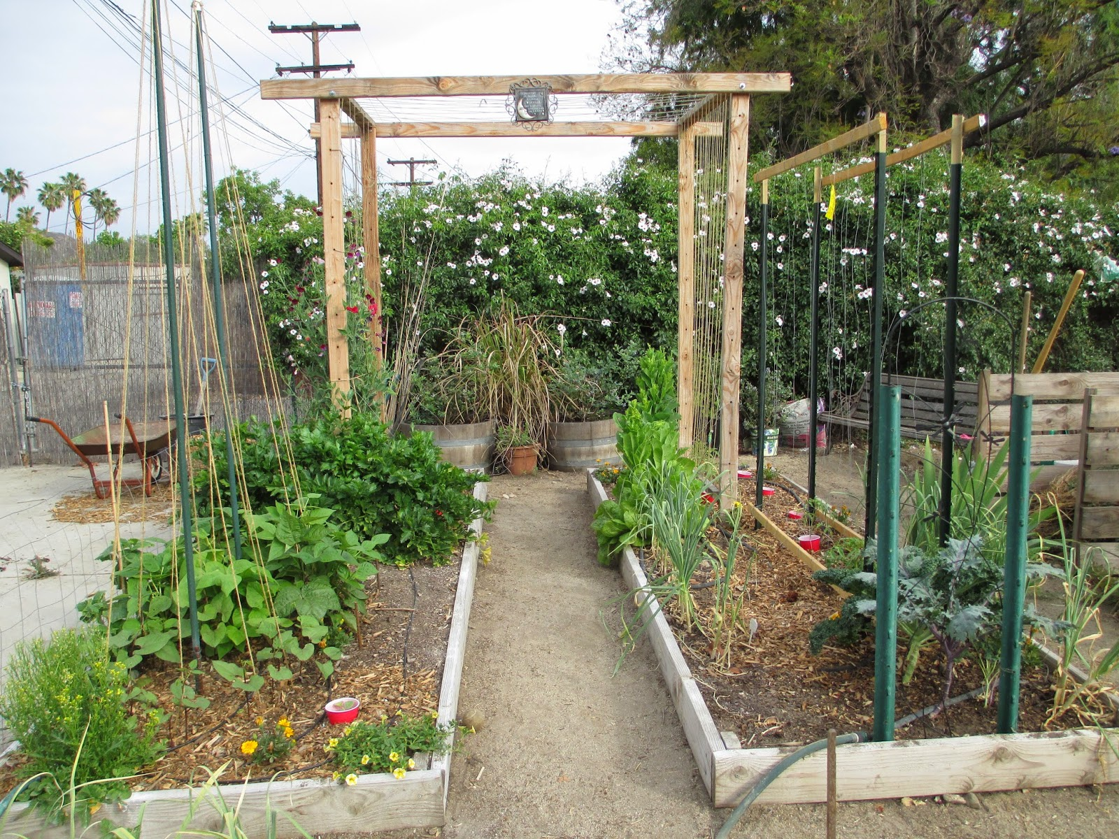Andie 39 s way trellis ideas for tomatoes cucumbers beans for Trellis design ideas