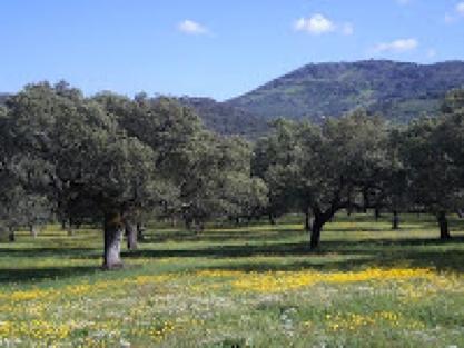 5 c quiere aprender clima mediterr neo de interior for Clima mediterraneo de interior