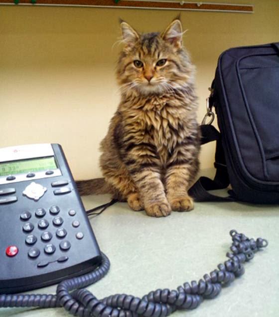 foto kucing kantor 01