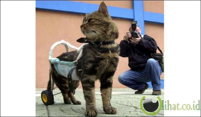 Cici si Kucing