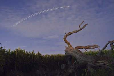 dead tree star trails