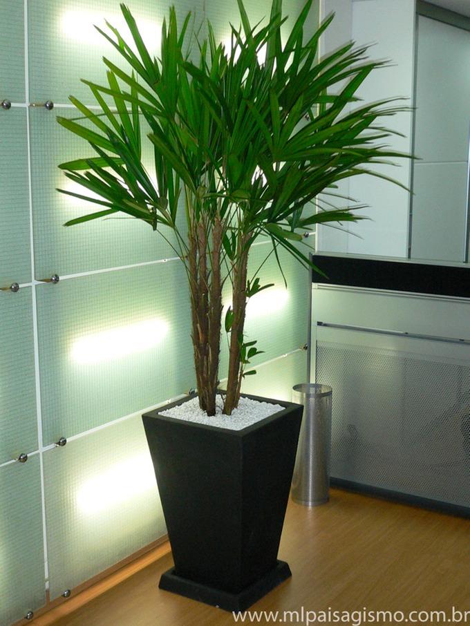 Construindo um castelinho plantas para sombra e jardins for Tipos de plantas para decorar interiores
