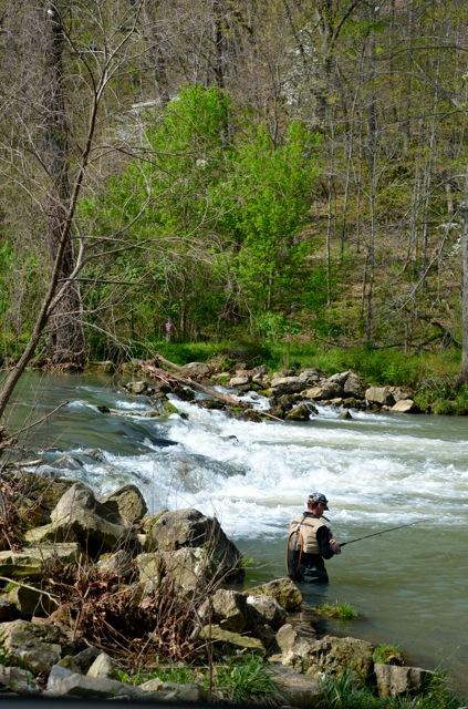 Weaver 39 s tackle store bennett spring fishing report for 4 for Bennett springs trout fishing