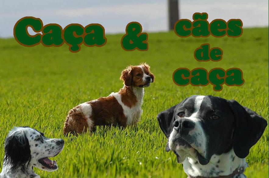 Caça e cães de caça