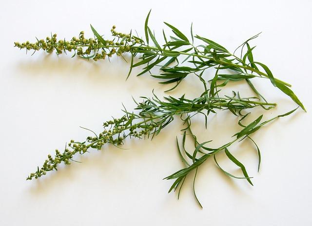 Common Herbs Shiveshs Kitchen