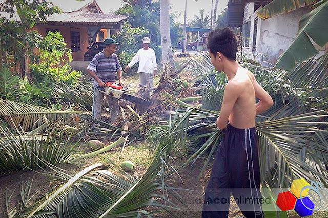 mknace unlimited | lagi pokok kelapa kena tumbang
