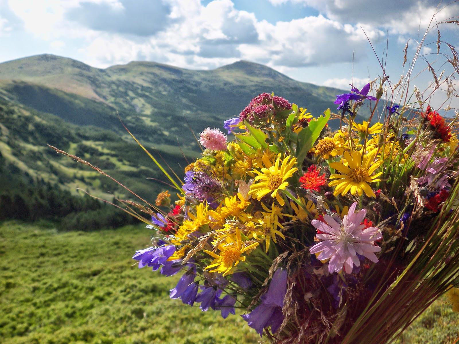 Садовые растения и цветы. Энциклопедия садовых цветов