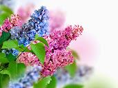 #2 Stunning Flowers Blooming