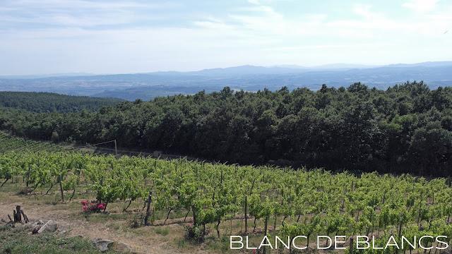Le Ragnaie vineyard - www.blancdeblancs.fi