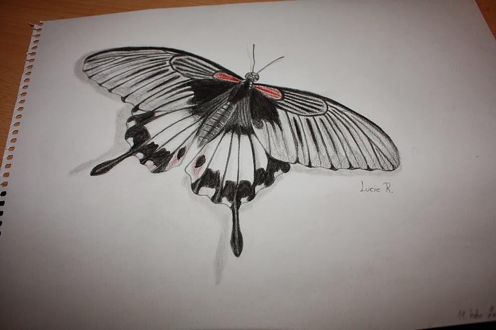Lucy S Fine Arts Knizni Blog A Neco Navic Kresba Motyl 2
