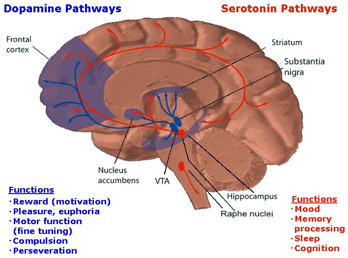 schizophrenia disease of the brain Schizophrenia is a complex brain disorder like many other illnesses, schizophrenia is believed to result from a combination of environmental and genetic factors.