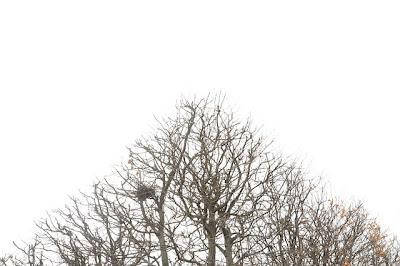 las copas de los arboles - tree tops