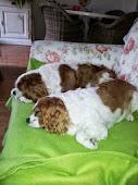 Semmy & Charlie