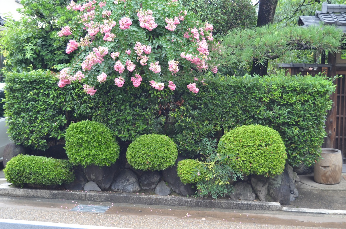 Noel 39 s garden blog a hard look at the japanese garden for Japanese garden bushes