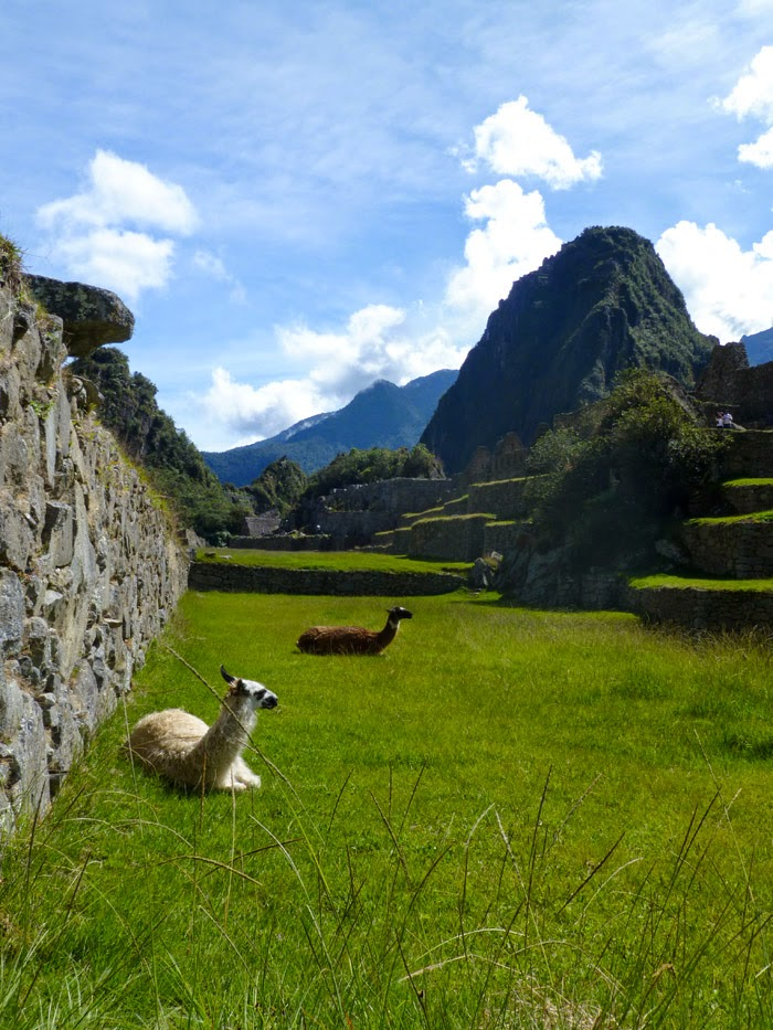 Machu Picchu | Alpacas and Huayna Picchu #travel
