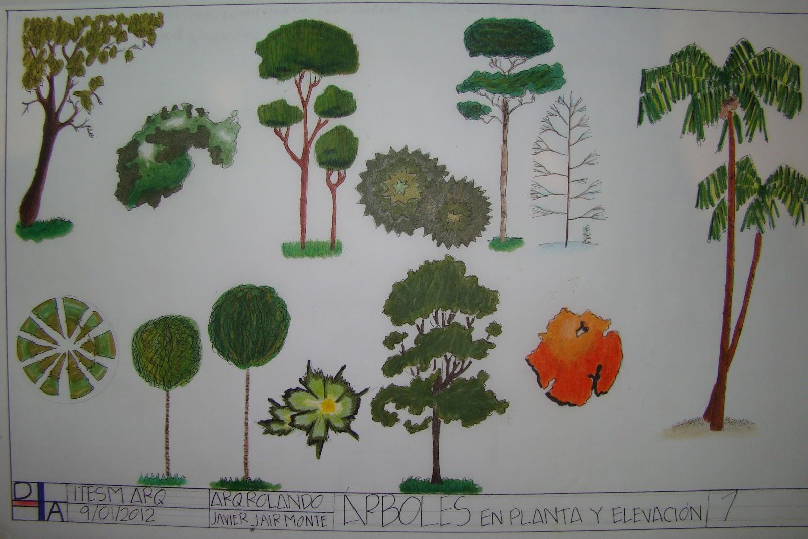 Dibujo arquitect nico rboles en planta y elevaci n for Tecnicas de representacion arquitectonica pdf