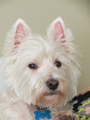 My Granddog Jack