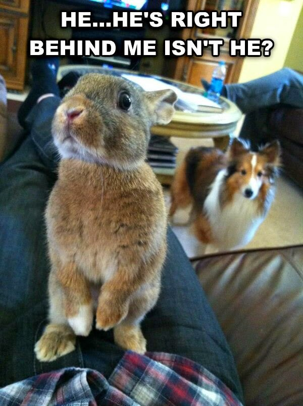 30 Funny animal captions - part 21 (30 pics), captioned animal pictures, bunny and dog