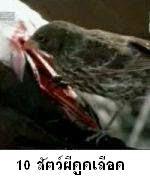 10 อันดับสัตว์ผีดูดเลือด