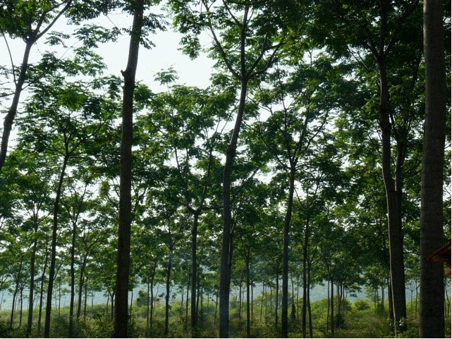agriculture and current deforestation practices Why are rainforests being destroyed  humans tend toward less-ecologically sound agricultural practices  there are the man-made causes of deforestation.