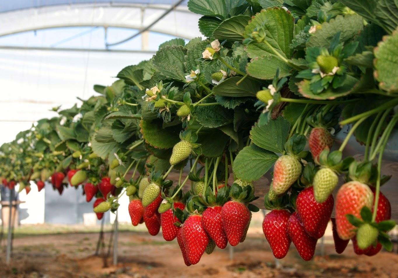 Thm tecnolog as de la horticultura mediterr nea en las for Tipos de viveros frutales