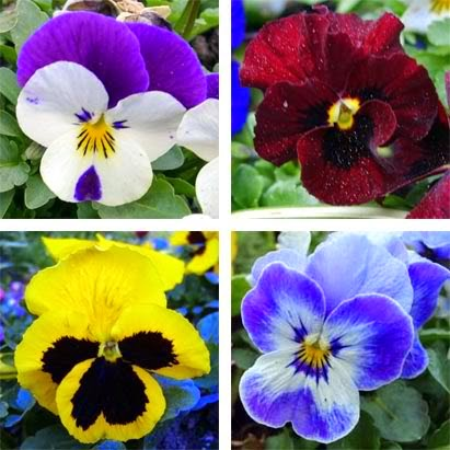 Edible Flowers – How to Use Them to Dress Up Your Beverage
