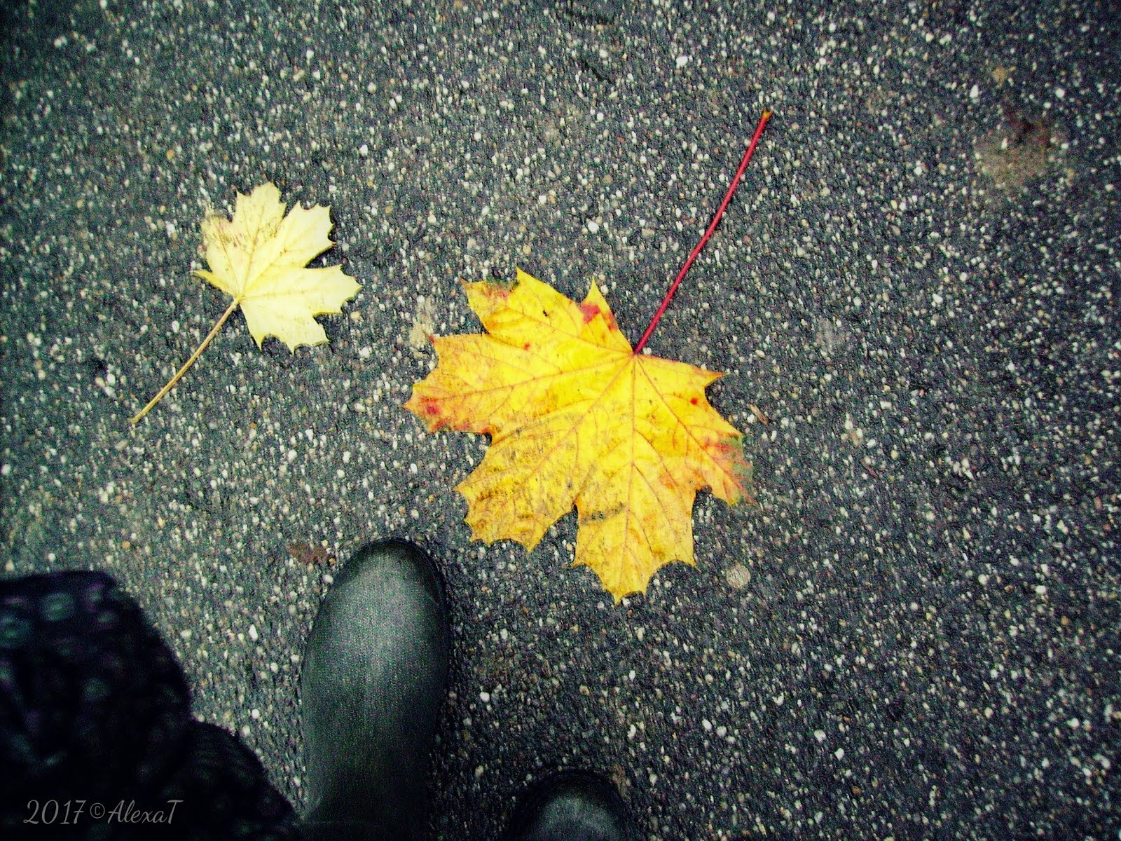"November. ""It looks that autumn looks like life itself""..."