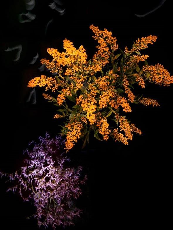 Sarah Illenberger fotografia Flowerwork flores como fogos de artifício