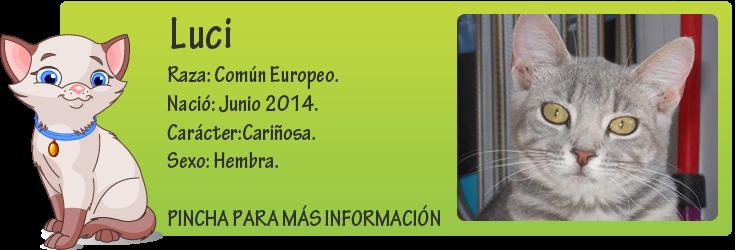 http://mirada-animal-toledo.blogspot.com.es/2014/09/luci-gatita-atropellada-en-adopcion.html