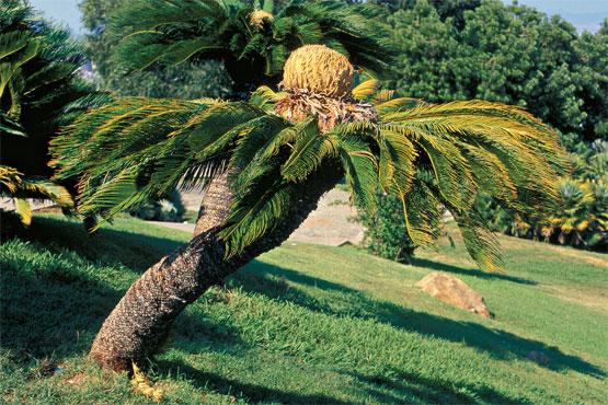 CEU Ciberaula SERES VIVOS (Reino de las plantas)