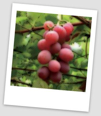 WAYAN SUYASA - web blog: Buah anggur dan kolesterol
