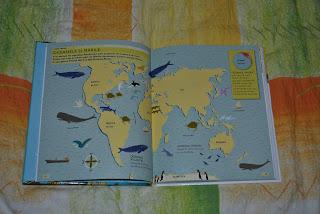 Oceanele şi mările