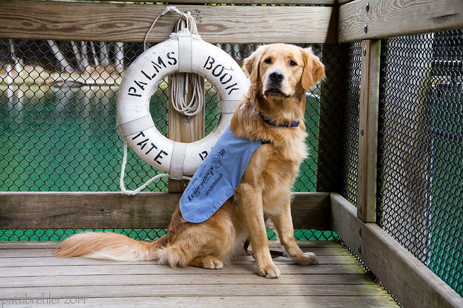 "The golden retriever, weraing a baby blue ""working"" jacket, is sitting on a wooden float in front of a white life ring that is hanging on a wood rail. In black letters on the ring are the words ""Palms Book State Park."" There is a wire grate between the top wood rail and the bottom rail."